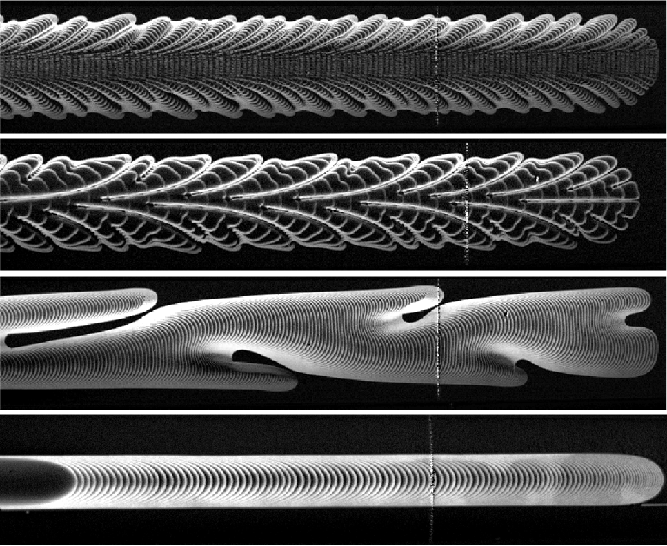 Composite binary images showing the spatio-temporal patterns formed when air displaces oil in a Hele-Shaw channel with an elastic upper boundary. By manipulating the initial level of collapse of the upper boundary, as well as the flow rate, we may observe a range of patterns, some reminiscent of feathers.